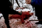 Porc sacrificat de Romani