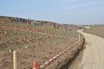 Tepu - Romania prinde radacini, multimea la plantat salcami