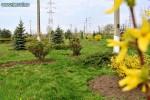 Parcul Dendrologic Tecuci va fi modernizat cu fonduri europene nerambursabile