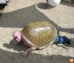 Politica şi ţestoasa