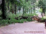 Efectele-furtunii_tecuci.eu