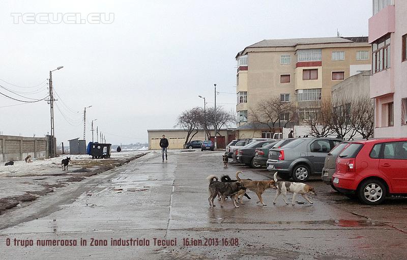 Caini-in-Zona-Industriala_Tecuci
